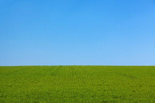 zakładanie trawnika z rolki w Toruniu